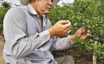 Vượt lên nghịch cảnh trở thành nông dân sản xuất giỏi